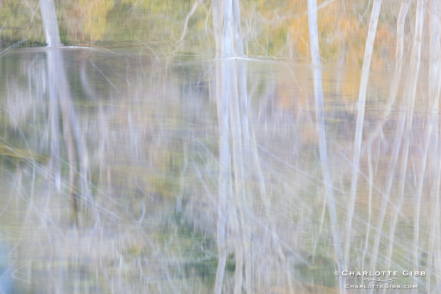Reflections, Merced River, Winter 2014
