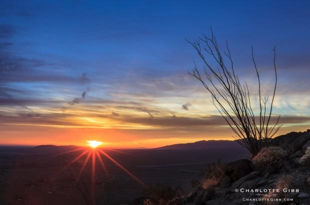 Borrego Desert Sunrise 2014