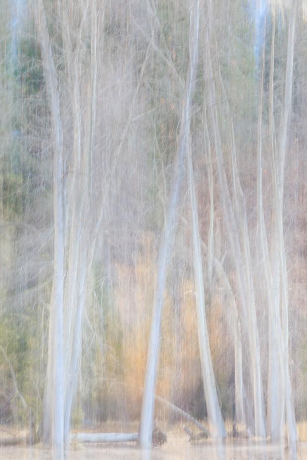 Cottonwoods Winter Light 2014